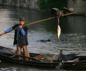 Ловля рыбы в Китае