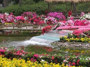 садоводство в китае