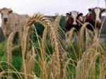 Сельское хозяйство Китая будет развиваться в Украине