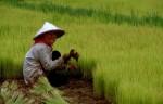 Сельское хозяйство в Китае