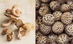 Китайский гриб шиитаке