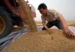 Ухань стала местом проведения 11-й Международной ярмарки китайского агропрома