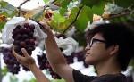 В Китае приступили к созданию винодельческой долины «Яньцин-Хуайлай»