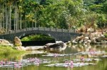 Янода – парк дождевого леса