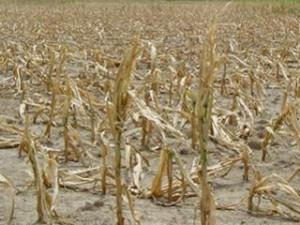 В Китае засухой уничтожено 1,33 млн гектаров сельскохозяйственных культур