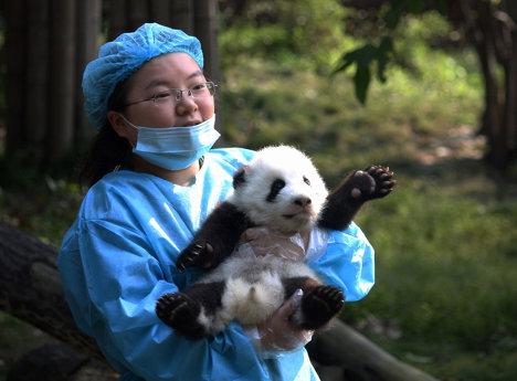 Лучшие зоопарки и заповедники Китая