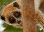 3 самых забавных животных, обитающих на территории Китая